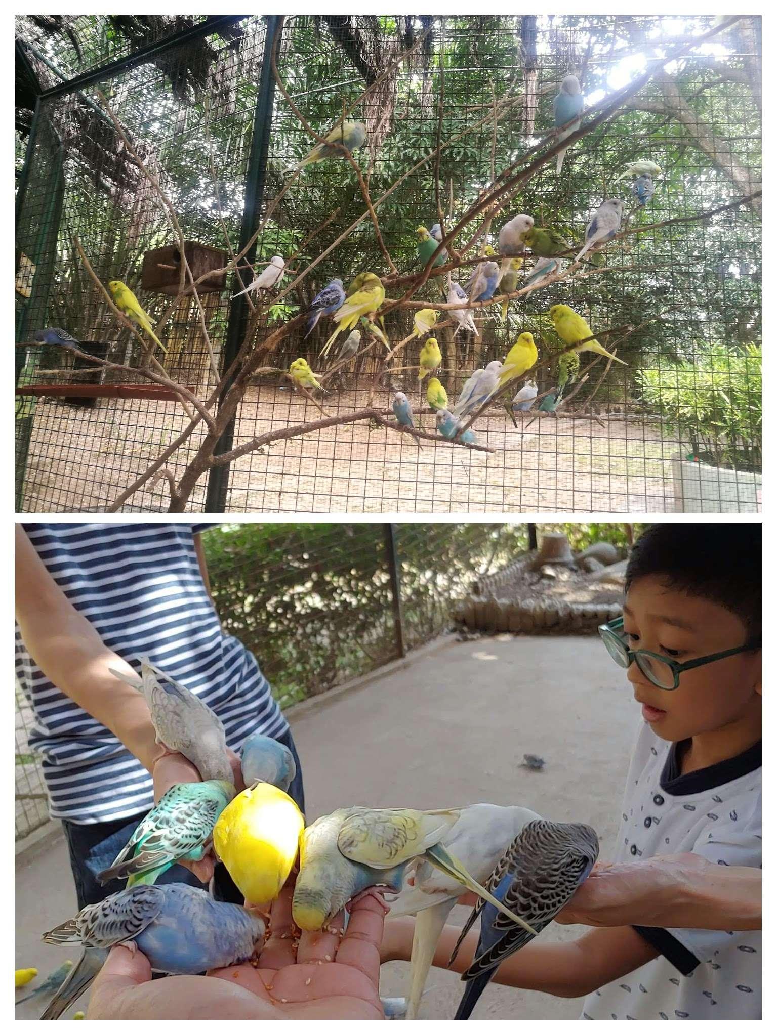 Zoocobia bird feeding activity